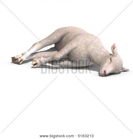rendering of a young sheep with clipping path and shadow over white poster