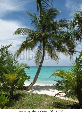 Maldives. Palma On The Beach