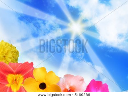 Sunshine Rays And Bright Flowers