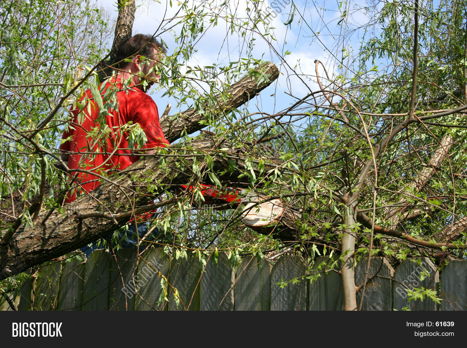 Man Chainsaw Fallen Image Photo Free Trial Bigstock