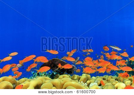 Coral, fish underwater with octopus in background