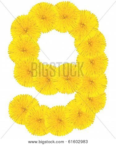 Number 6 Made From Dandelion Flower