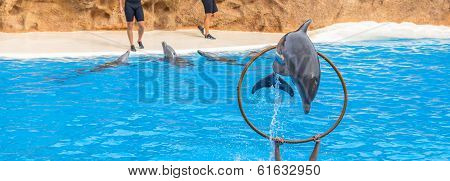Dolphin Jumping Through a Ring