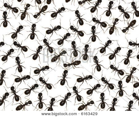 Crawling with Ants