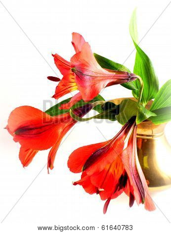 red inka's lily