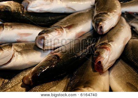 Fishes On Venetian Fish Market, Italy