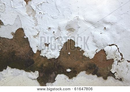 Rising Damp And Peeling Paint On Exterior Wall