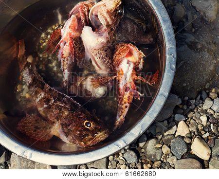 Fresh Fish Caught