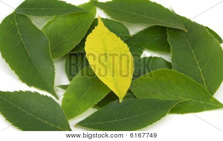 Uniqueness - Yellow Leaf Among Greens (centered)
