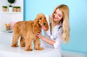 Beautiful young female veterinarian examining dog in clinic poster