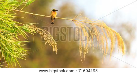 Colorful Bee Eater Sitting On A Branch