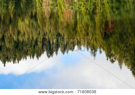 Abstract Autumn Pine Forest Reflection In River