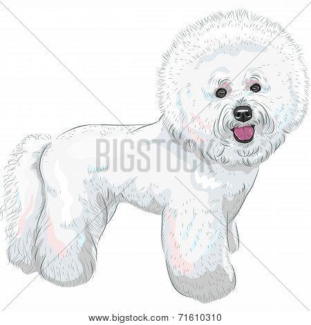 Vector White Cute Dog Bichon Frisé Breed
