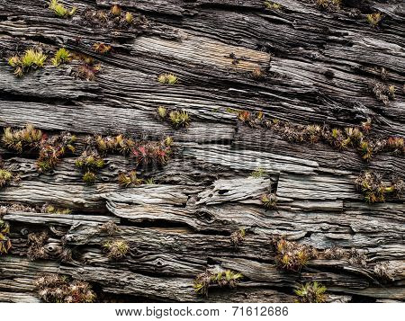 Moss On Wooden Bark In Nature