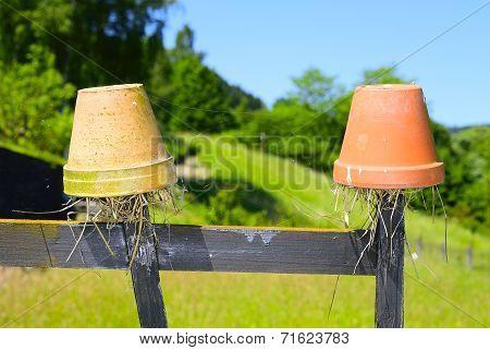 earwig pot