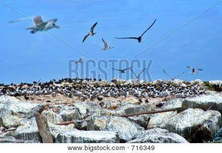 poster of Migratory birds making nests on a rocky island