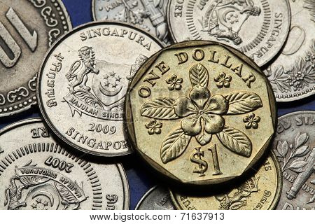 Coins of Singapore. Periwinkle flower (Lochnera rosea) depicted in Singapore one dollar coin.