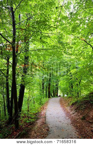Forest Path on Monchsberg, Salzburg, Austria, Europe