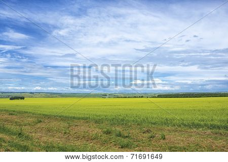 Beautiful Summer Landscape at Sunny Day