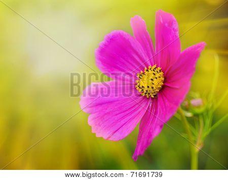 Beautiful Flower On Green Grass Background