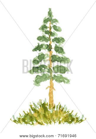 Watercolor Fir Tree, Hand Drawn And Painted