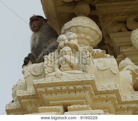 Monkey at a temple
