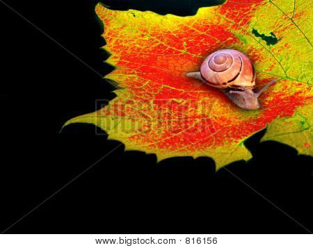 Snail And Shell