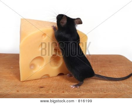 little mouse and cheese poster