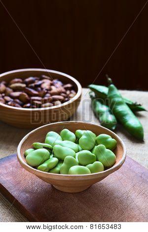 Raw Broad Beans (lat. Vicia Faba)