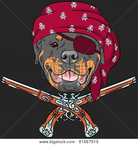vector Dog Rottweiler Pirate with pistols