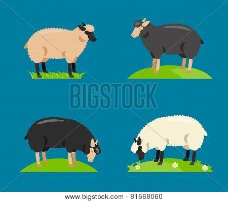 Illustration of a cartoon sheep.Vector