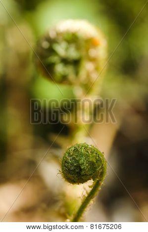 Fresh Green Leaves Of A Fern