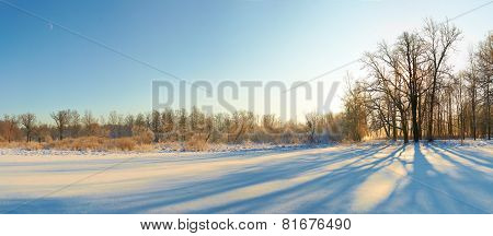 scenic landscape of bare trees and its shadows near  snow field in sunny winter day