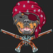 Vector Dog Rottweiler Pirate with pistols, wearing red bandana and eye patch poster