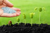 hand giving chemical fertilizer to plants growing in sequence of seed germination on soil poster