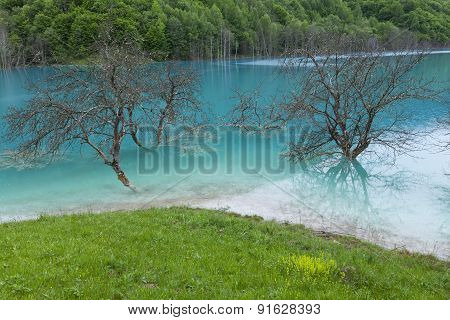Blue Lagoon And Trees
