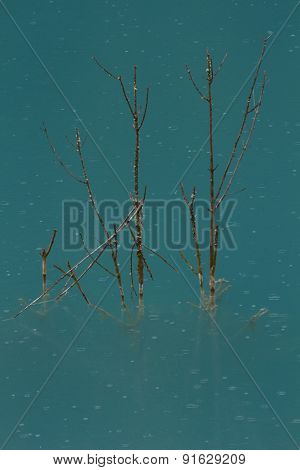 Dry Wood In Water