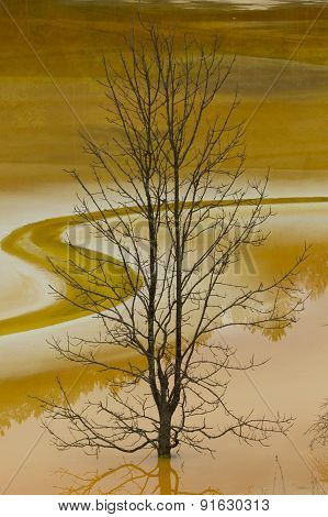 Tree In Poluted Water