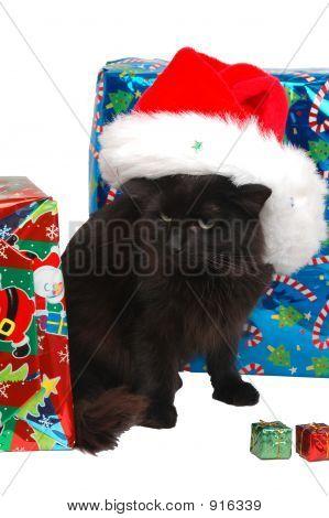 Christmas Black Cat 2