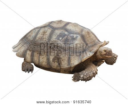 Turtle Farm Animals