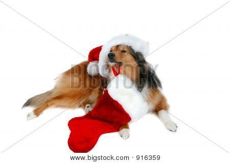 Christmas Dog 3