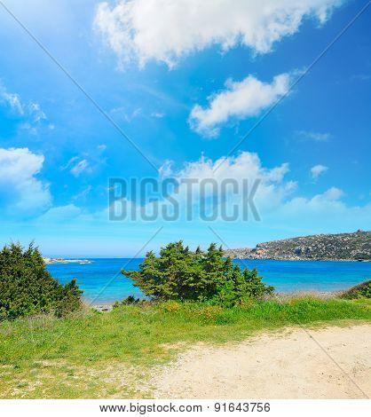Vegetation By Capo Testa Coastline