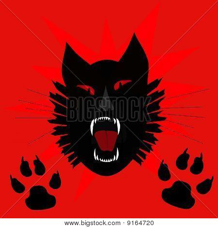 black cat scream