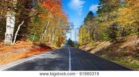 autumn mountain landscape. asphalt road going to mountains passes through the ever green coniferous shaded forest at sunset