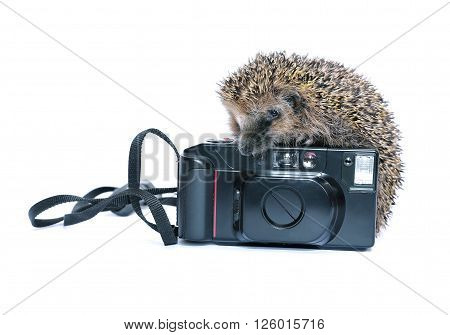 Forest wild hedgehog with a camera isolated on white background ** Note: Soft Focus at 100%, best at smaller sizes