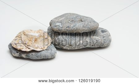 Seashells and stones on white background - group of two ** Note: Shallow depth of field