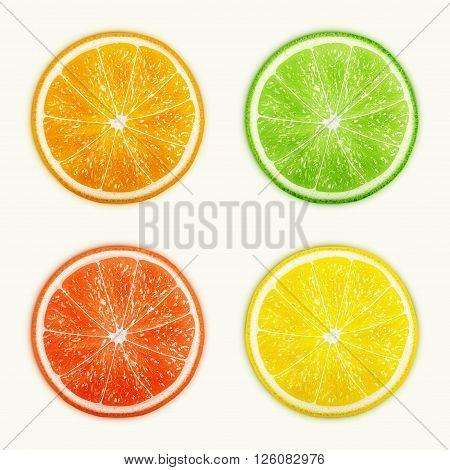 Set of citrus fruits. Orange Lime Grapefruit Lemon. eps10 vector illustration