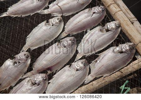 drying fish, flatfish on the net, fishing village in vietnam
