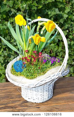 Beautiful white Basket with sping flowers like Jonquils