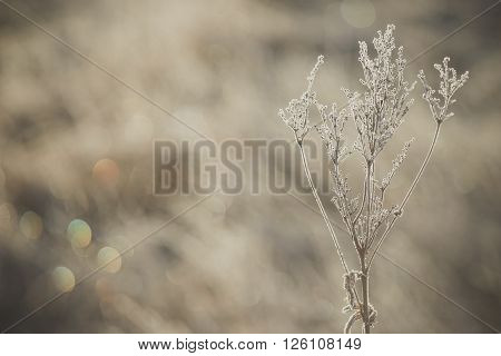 Dry plants covered by ice crystals open aperture with soft bokeh